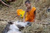 buddhas_lost_children4.jpg